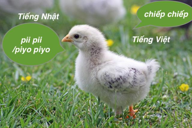 Tiếng gà con trong tiếng Nhật  (1).png