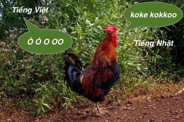Tiếng kêu của gà trống trong tiếng Nhật