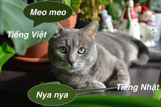 Tiếng kêu của mèo trong tiếng Nhật