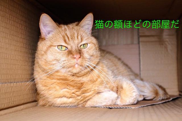 猫の額ほど狭い部屋だ