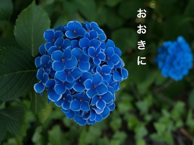 Cảm ơn trong tiếng Kansai: おおきに